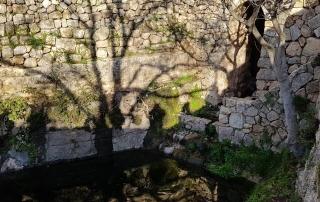מבית מאיר לסטף