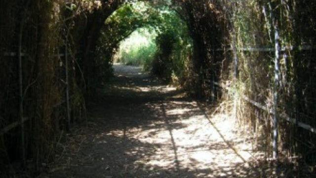 מקורות הכנרת – המג'רסה – שפך נחל דליות