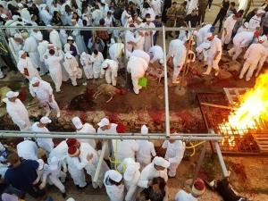 זבח פסח הכנסת הכבשים