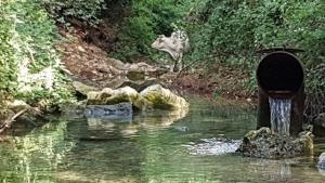 הזרמת מים בנחל כזיב