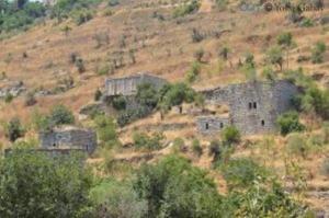 עמק הארזים