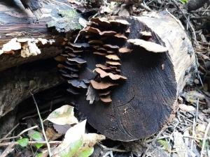 פטריות על עץ
